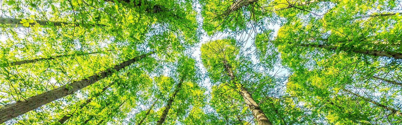 woods-alumiframe