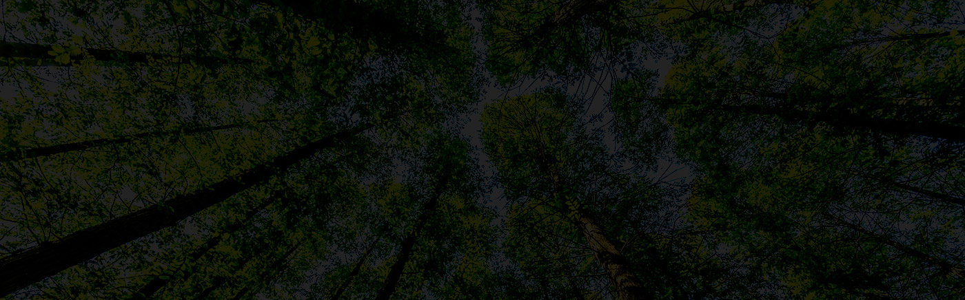 woods-escuro